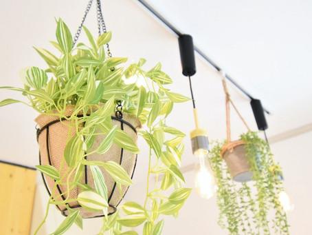 賃貸でおしゃれな照明が標準装備といえば、グレイスロイヤル。