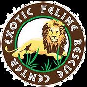 exotic feline.png