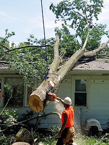 Tree on house_edited.jpg