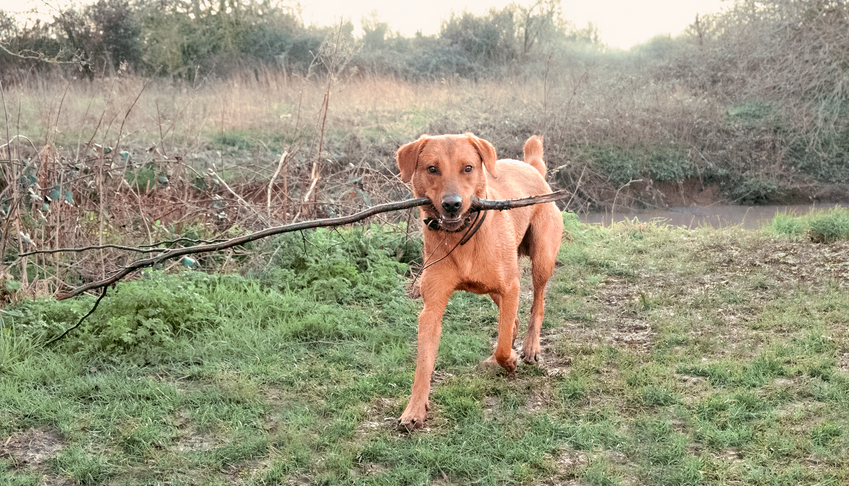 Otis With Stick.png