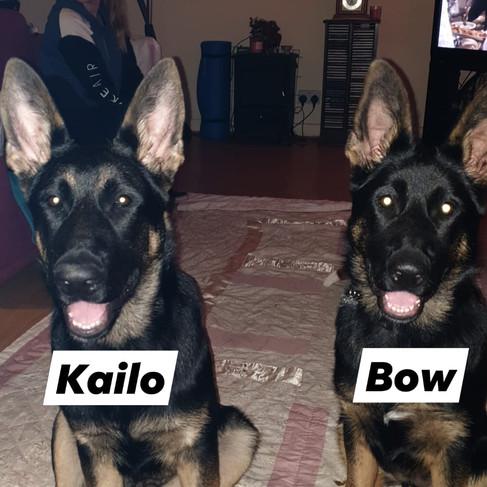 kailo and bow.jpg