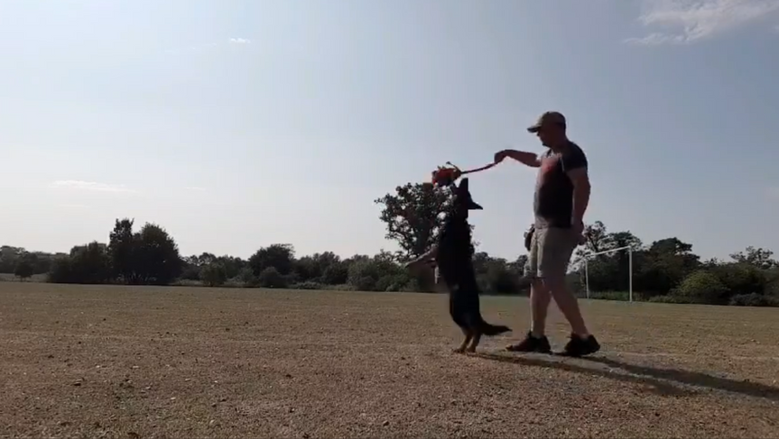 Bow Dog Training Session.PNG