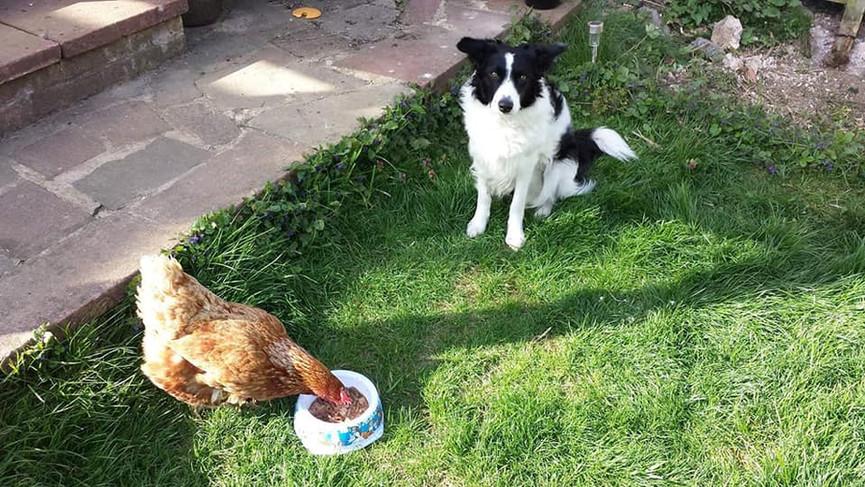 lulu and chicken.jpg
