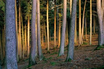 Alba nel bosco, Cevo