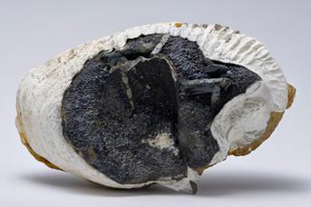 Vivianite su fossile - Crimea