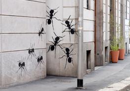 Formiche in Via del Torchio