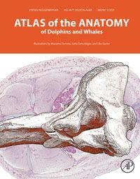 Atlas_Anatomy_Dolphins_Whales.jpg