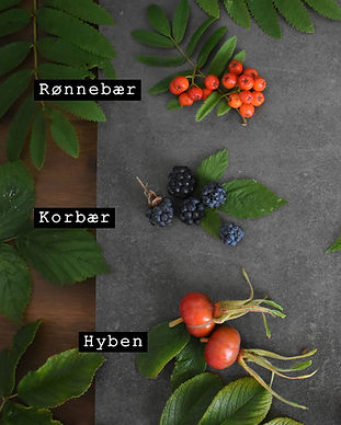 Vilde bær.jpg