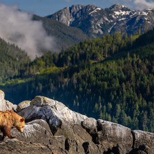 Grizzly bear scenery