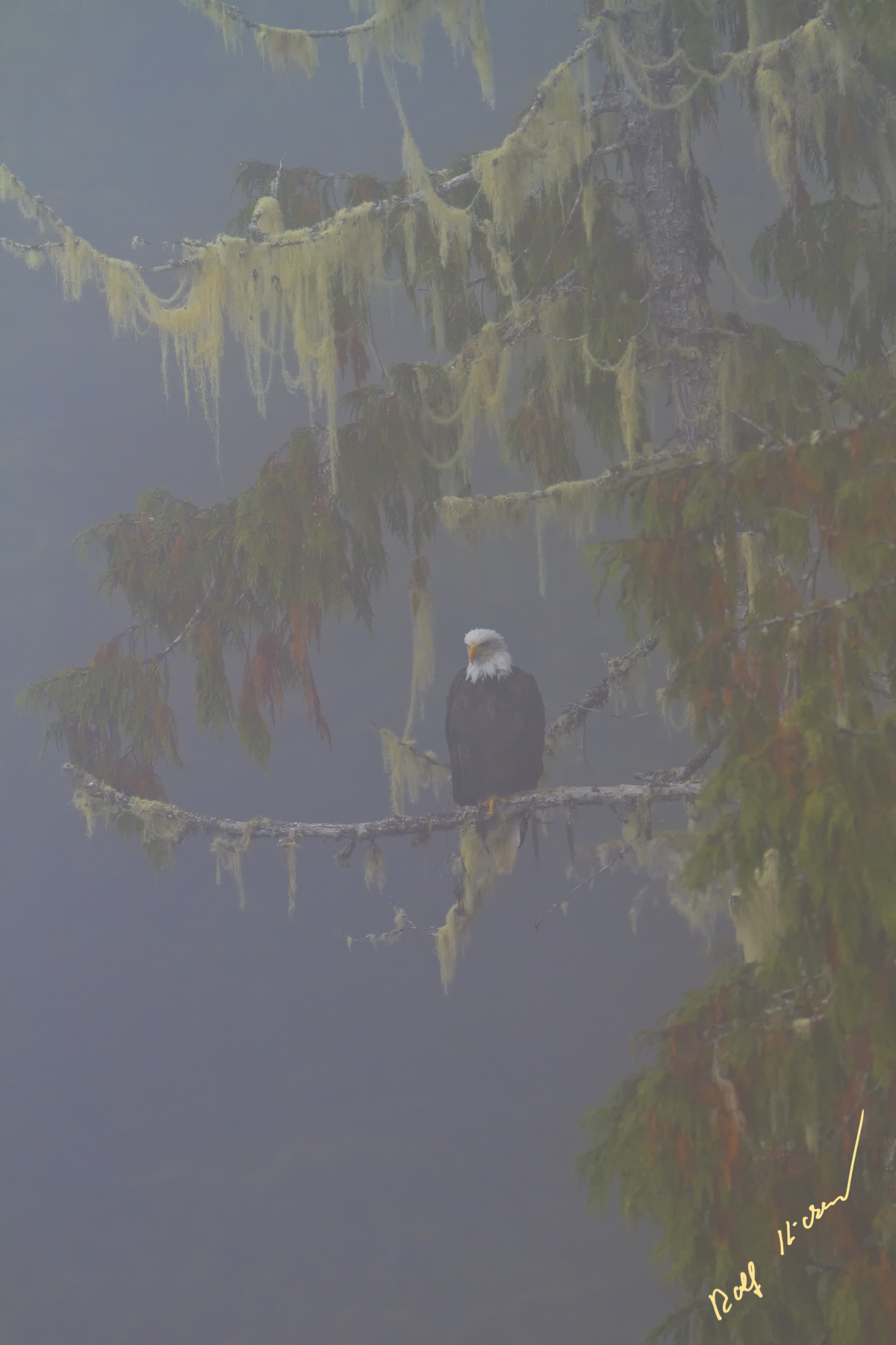 coastal fog with eagle
