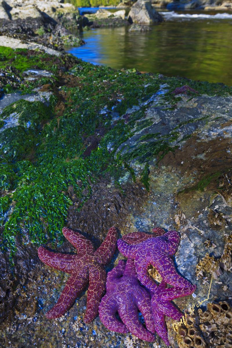 starfish lagoon