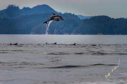 high jumping dolphin