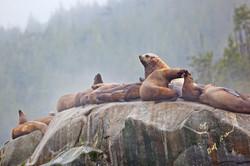 Sea lions fog