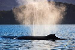 whale spout backlit