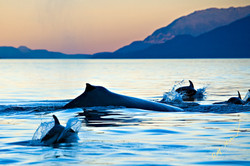 whale and dolphins