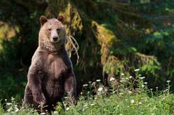 grizzly bear photo tour