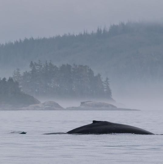 Humpack Whale Scenery
