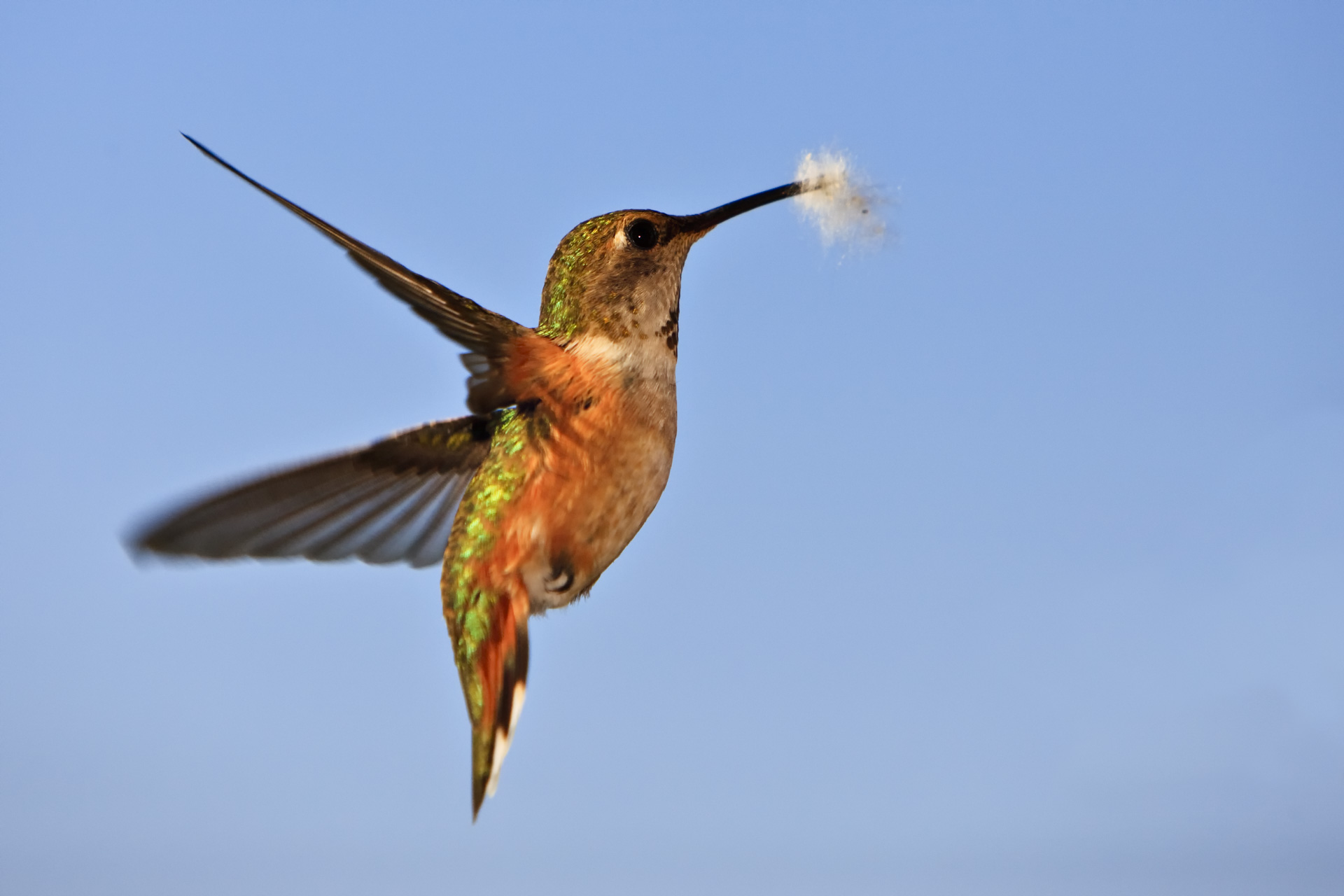 humming bird close