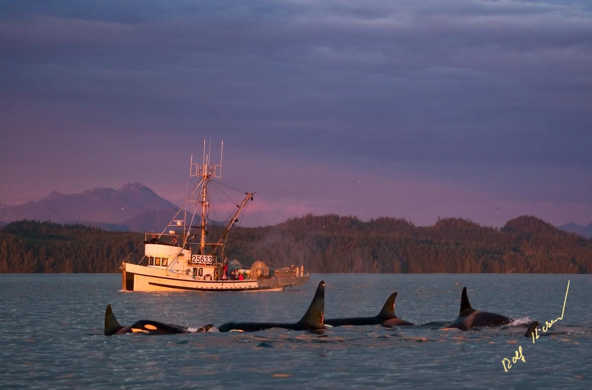 fishing boat orca family