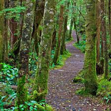 Hiking Trail cape Scott
