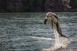 having fun dolphin