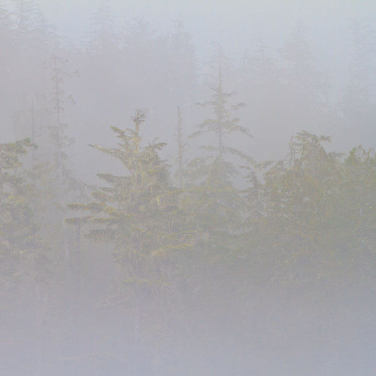Great Bear Rainforest Fog