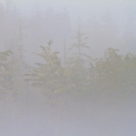 Great Bear Rainforest Fog