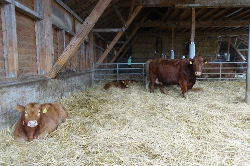 Mischpaket Bio Rindfleisch 10kg