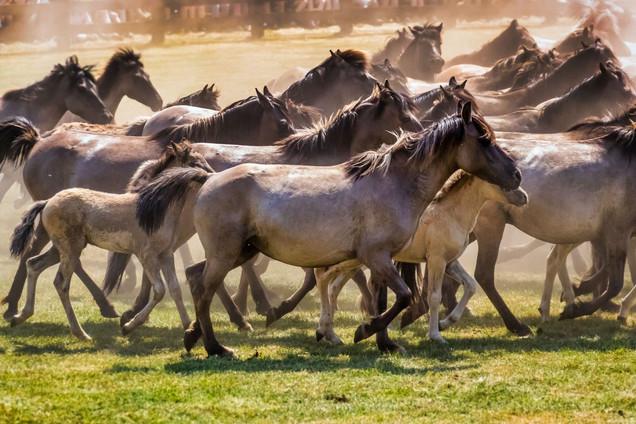 Haustiere,Pferde,Shooting
