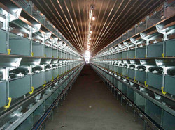 Poultry Facilities