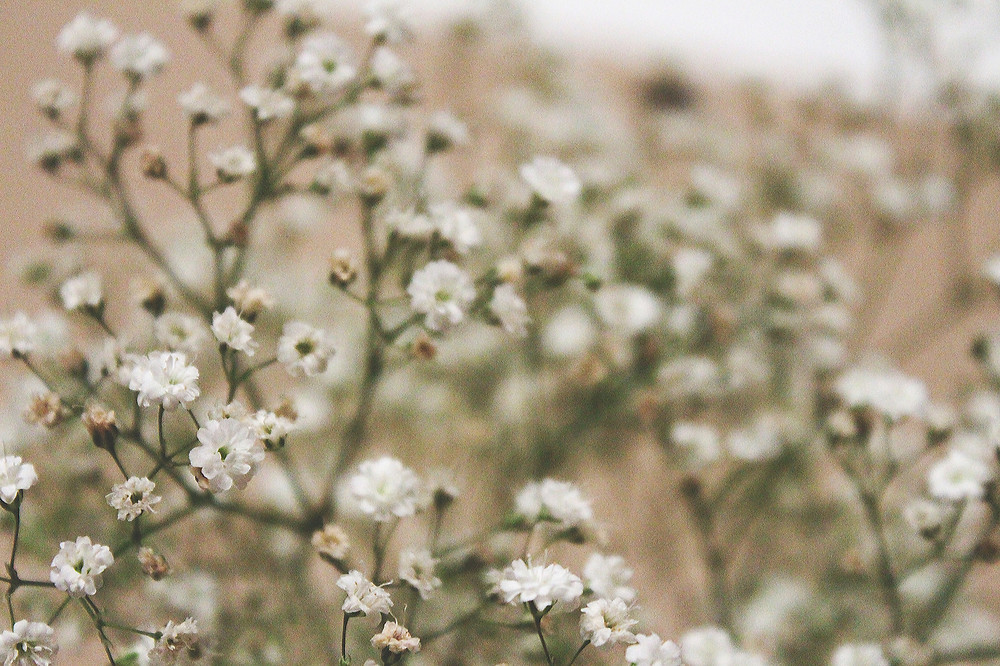 Gypsophila flowers - photo by christiankaff