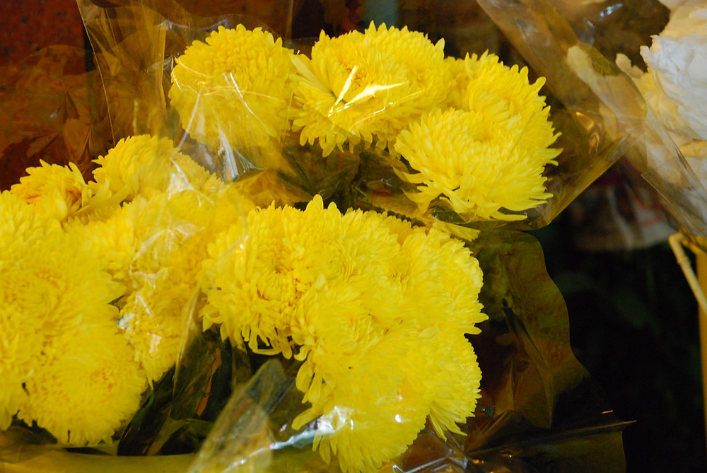 Chrysanthemums at Pak Khlong Talat flower market in Bangkok, Thailand - photo by Irene2005