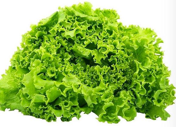 Lettuce: Green Leaf (Muir)