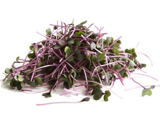 MicroGreens: Red Cabbage
