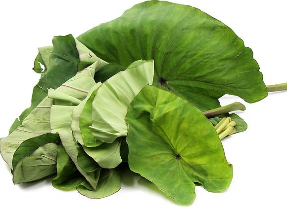 Taro: American Leaf (Tayerblad)