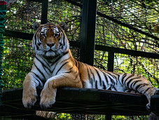 Wildest Dreams 2019 - Assiniboine Park Zoo