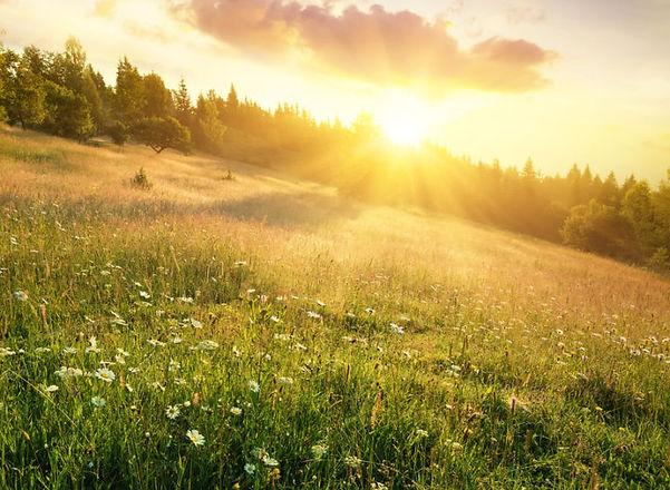 sunshine2-720x527.jpg