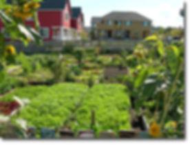 urban_gardens_2012.jpg