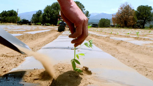 FL Planting 2020