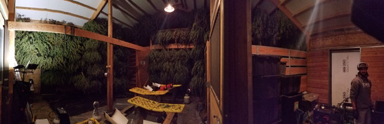 Late Night Trim Sessions
