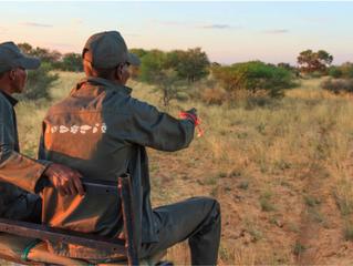 Quanto può essere efficace monitorare la Fauna fruendo di tracciatori esperti?
