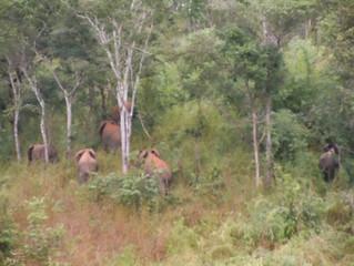 L'importanza delle tracce e i segni nella conservazione dell'elefante africano