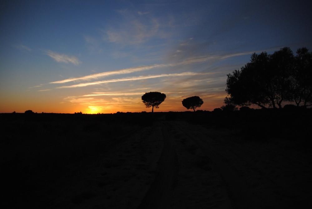 Tramonto a Doñana
