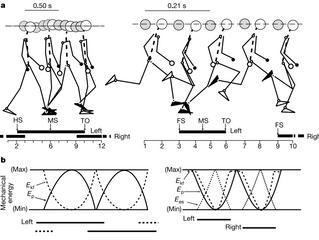 Il ruolo della corsa e della camminata nell'evoluzione dell'uomo