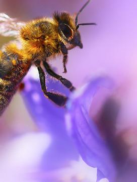 Bee at Fullbrook Nursery