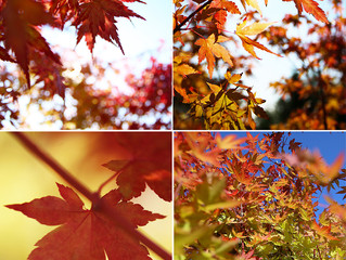 Stunning Acers