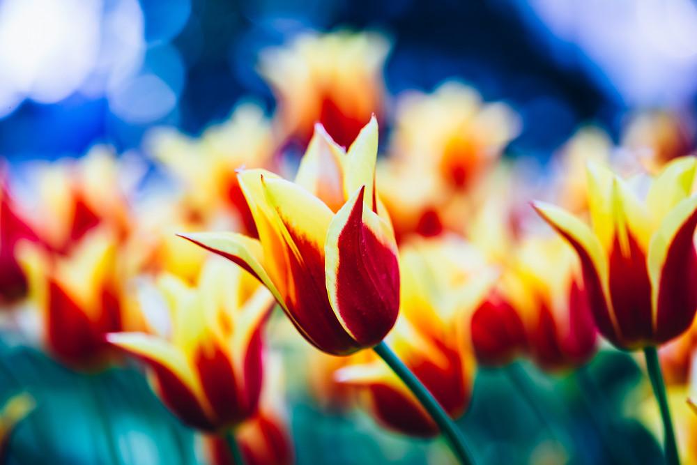 Ayurveda in spring