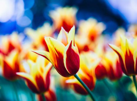 Spring - New Season, New Approach