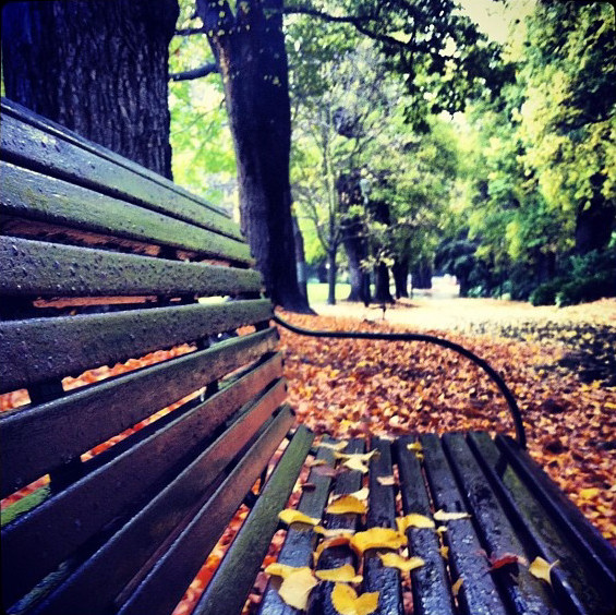 AutumnFitzroyGardens_edited.jpg