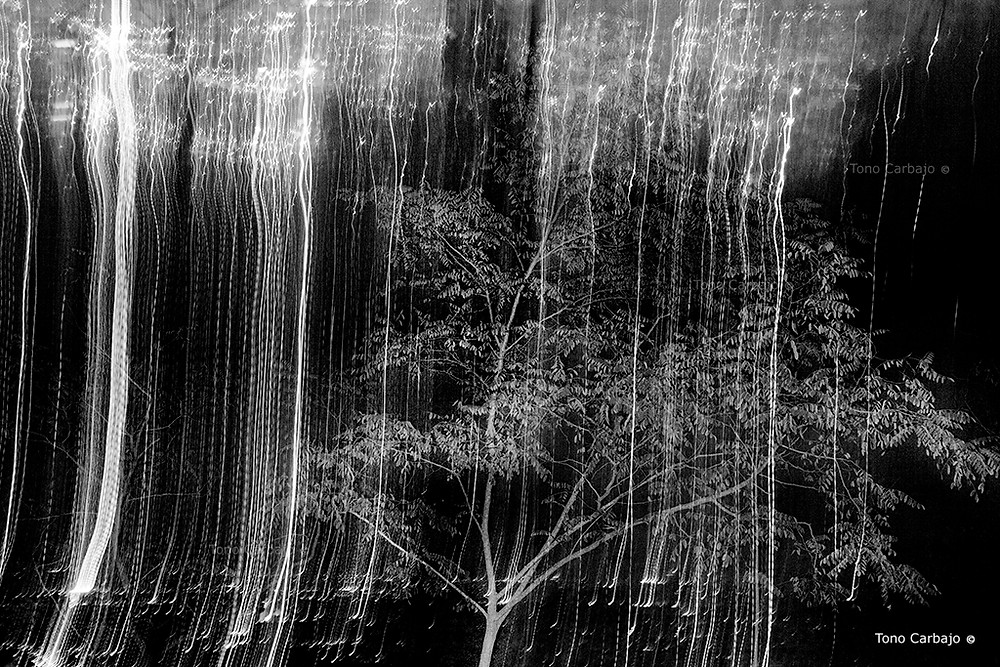 árbol noche barcelona